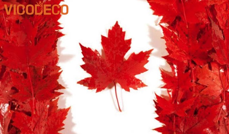 La-phong-bieu-tuong-cho-Canada